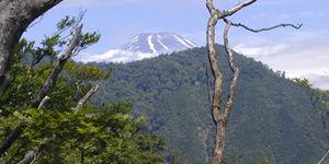 位牌岳への登山道より2000年6月18日